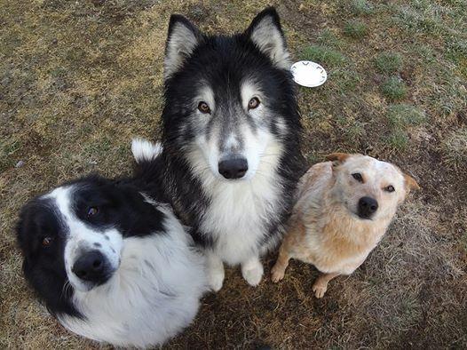 perros pidiendo