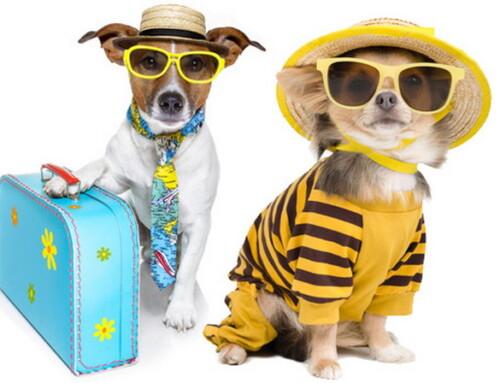 Viajando con nuestra mascota