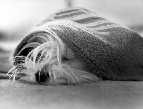 La tos de las perreras